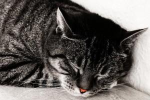catmeditation